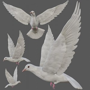 Fully Rigged low poly Dove model