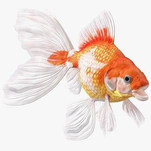 White Goldfish Aquarium Fish Rigged 3D