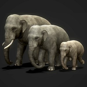 3D animal mammal elephant