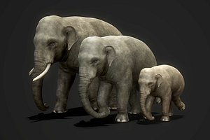 3D animal mammal elephant