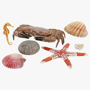 sealife set 3D