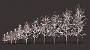 birch winter snow 3D model