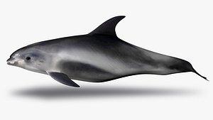 3D white beaked dolphin model