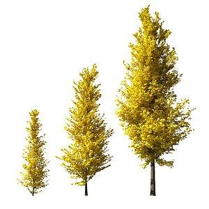 ginkgo lemonlime spire trees model