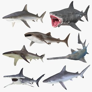 Rigged Sharks Collection 8 3D