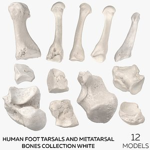 3D Human Foot Tarsals and Metatarsal Bones Collection White - 12 models model