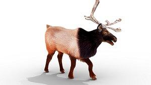 3D Fur RedReindeer Rigged Blender