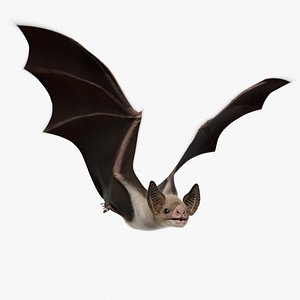 realistic vampire bat animations 3D model