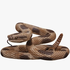 3D rigged rattlesnake model