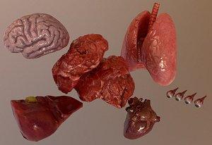 Internal Organs Collection 3D model