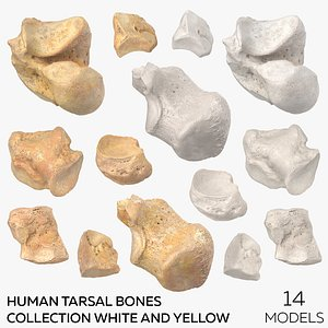 3D Human Tarsal Bones Collection White and Yellow - 14 models