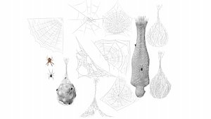 Cobweb collection 3D model