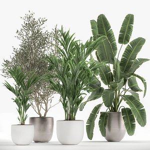 Houseplants in a flowerpot for the interior 1034 3D