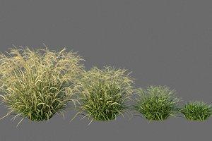 XfrogPlants Elliots Lovegrass - Eragrostis Elliottii 3D model
