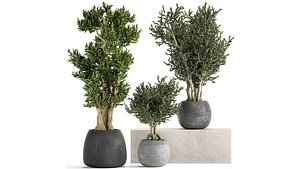 flower pot trees model
