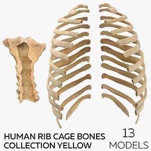 Human Rib Cage Bones Collection Yellow - 13 models 3D model
