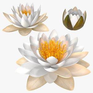 European White Water Lily Nymphaea Alba Set 3D model