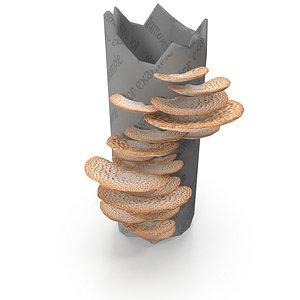3D tinder fungus