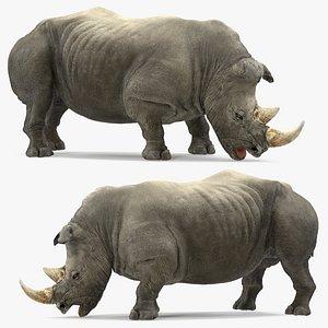 adult rhino drinking pose 3D model