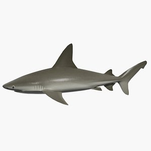 3d shark mezirozame