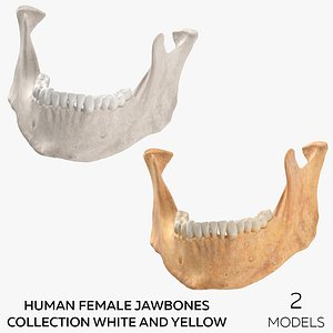 Human Female Jawbones Collection White and Yellow - 2 models 3D model