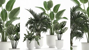 Collection of decorative plants in white flowerpots 927 3D model