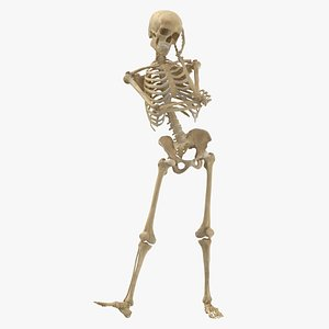 3D Real Human Female Skeleton Pose 71(1) model