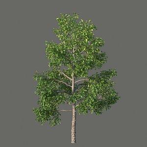 3D model XfrogPlants Pigeonplum - Coccoloba Diversifolia