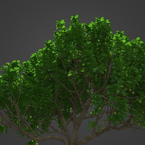 2021 PBR Fig Tree Collection - Ficus Carica 3D
