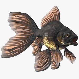 Black Moor Goldfish Rigged 3D