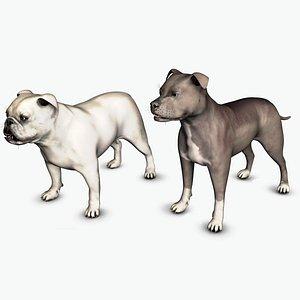 3D American Pitbull Male and English Bulldog Male Set