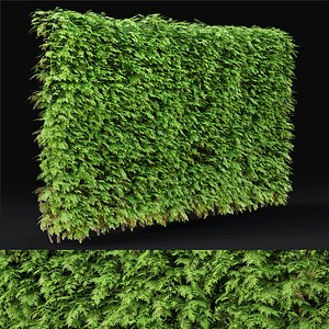 3D thuja hedge