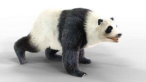 Fur Panda Bear animated 3D