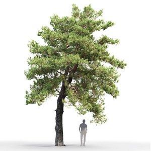 3D tree sylvestris 15