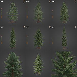 2021 PBR Black Spruce Collection - Picea Mariana 3D model