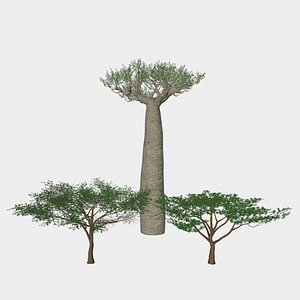 african tree africa 3D model