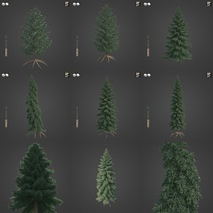 3D 2021 PBR White Spruce Collection - Picea Glauca