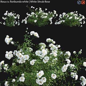 Rosa floribunda white - rose 01 model