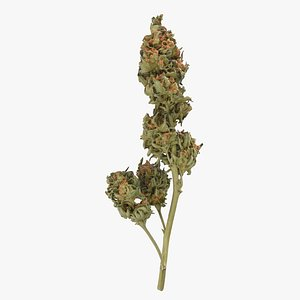 Cannabis Branch 04 3D
