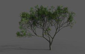3D Eucalyptus gum model
