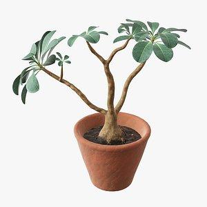 pot flower desert 3D model