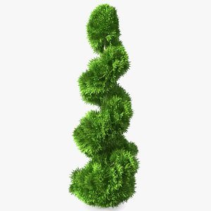3D Twisted Chinese Arborvitae