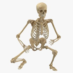 3D real human female skeleton