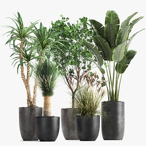 Houseplants in a flowerpot for the interior 1016 model