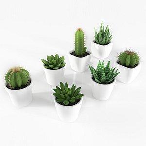 3D succulente cactus pot plant model