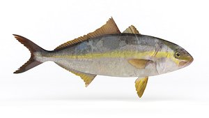 Trevally Fish 3D model