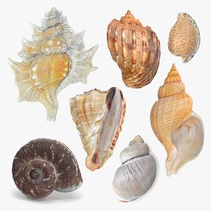 Shell Collection 3D model
