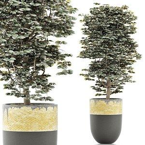 ligustrum plants 3D model