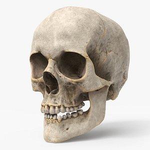 human skull pbr - 3D model