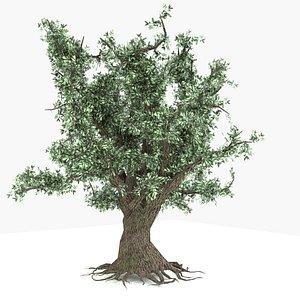 3D oak tree live model